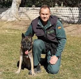 Muere Elton, el héroe de cuatro patas de la Guardia Civil que encontró a Diana Quer